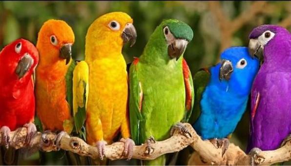 Как увеличить конверсию лендинга: используем психологию цвета. Часть 2